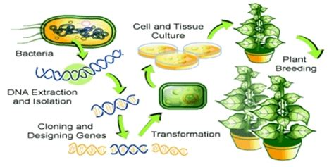 Genetically modified soybean research paper